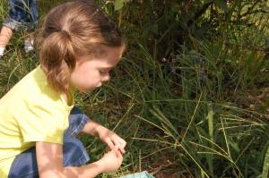 Grace picking blueberries
