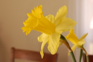 Scrolling through last March's photos, apparently my desire for daffodils is not limited to this year.